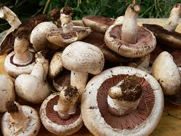 YUMMY MUSHROOMS