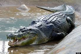 Largest crocodile lolong dead