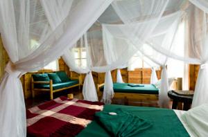 budongo eco lodge, forest