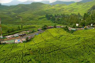 Uganda Tea Estates and Growers, Processors, Blenders and Exporters