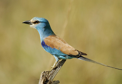 Uganda Birding Safari Tours, Birdwatching Guides
