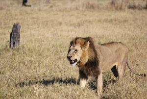 Botswana safari holidays