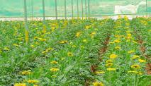 Yellow flower greenery