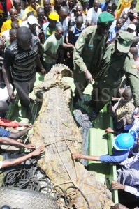 Now the world's Largest crocodile from Uganda