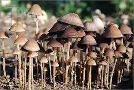 Tasty mushrooms
