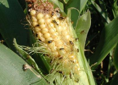 Uganda Pest Control Equipment And Services