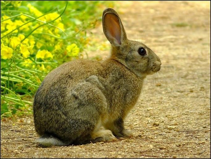 rabbits uganda